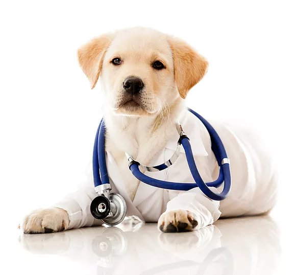 Dog Health Care Myths: Are You Falling for Any of These?, Peoria, AZ – Arrowhead Pooper Scoopers