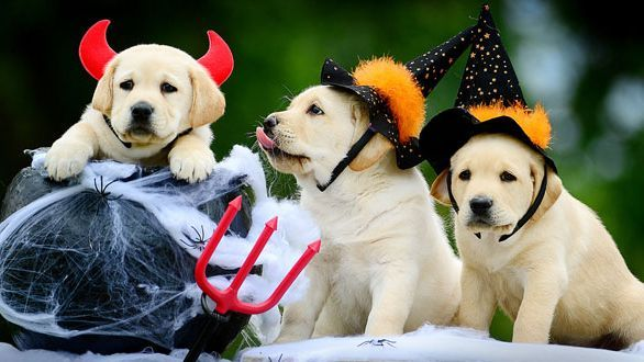 Trick or Treat: Halloween Hazards for Fido, Peoria, AZ – Arrowhead Pooper Scoopers