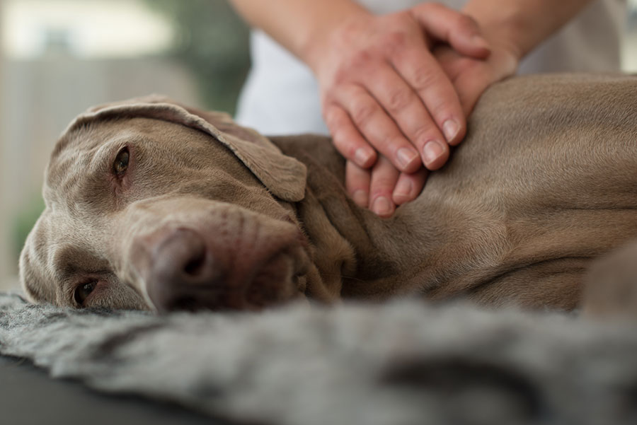 Benefits Of Massage Therapy For Your Dog In The Valley