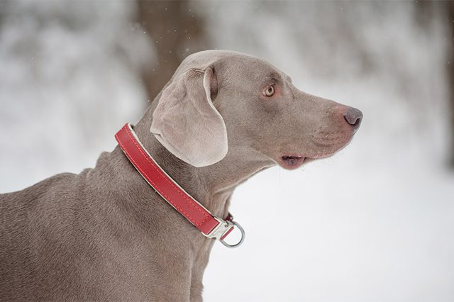 Choosing The Right Collar for Your Dog, Peoria, AZ – Arrowhead Pooper Scoopers