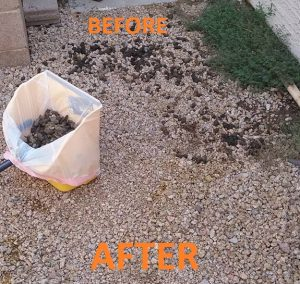 Arrowhead Pooper Scoopers Before and After Dog Poop Removal