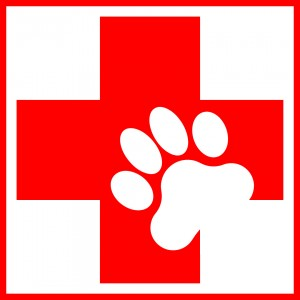 Pet First Aid, Peoria, AZ – Arrowhead Pooper Scoopers